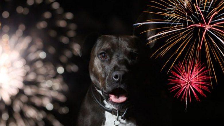 Fishekzjarrët? Çfarë frike për kafshët e shtëpisë!