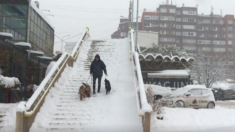 Dashuria e 21 vjeçarit nga Prishtina për qentë (Video)
