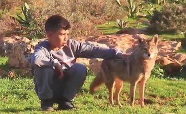 Djaloshi libian që shoqërohet me një ujk, bashkë me të cilin edhe kujdesen për kopenë (Video)