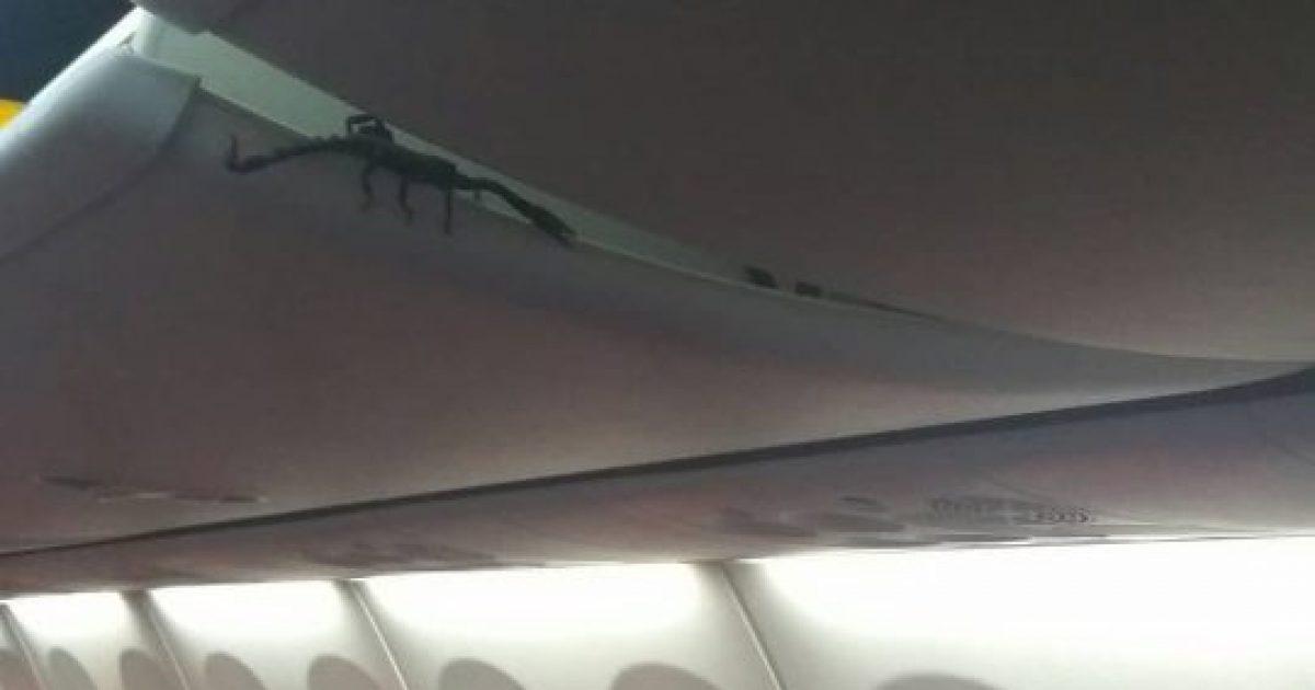 Akrepi helmues doli prej dollapit të aeroplanit, lëvizte mbi kokat e udhëtarëve të tmerruar (Video)