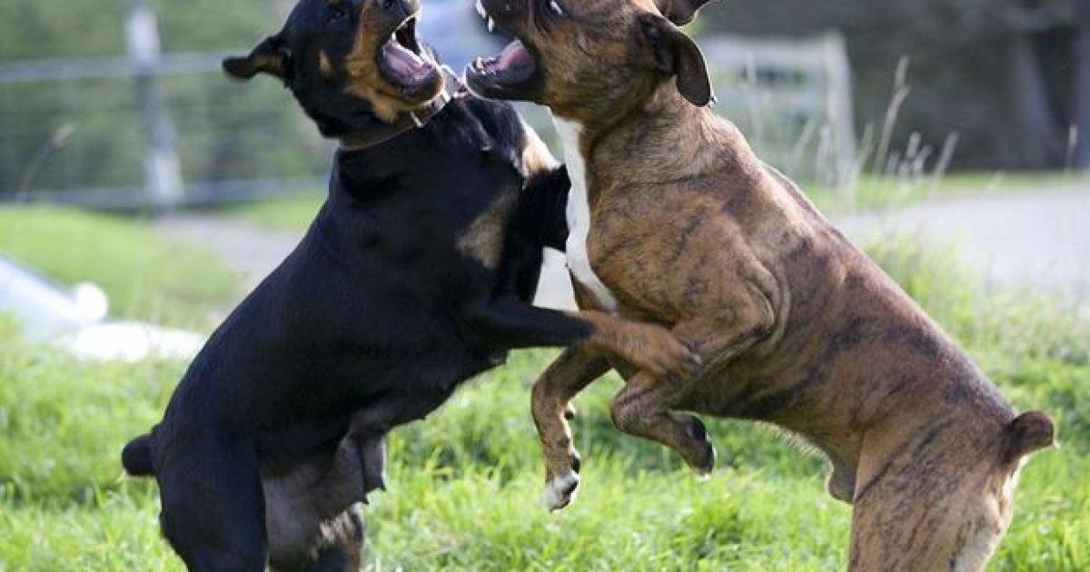 Keqtrajtimi i kafshëve me Kodin e ri penal dënohet deri në 6 muaj burg