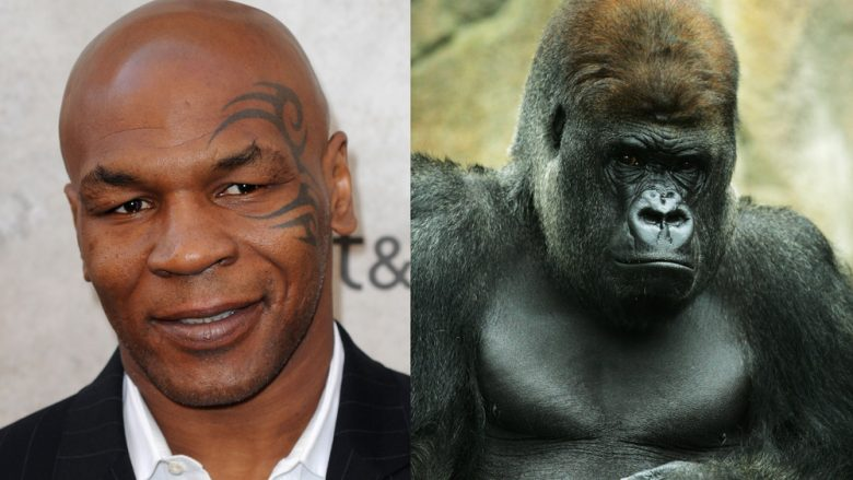 Mike Tyson, gorilla (Foto: Getty Images/Guliver)