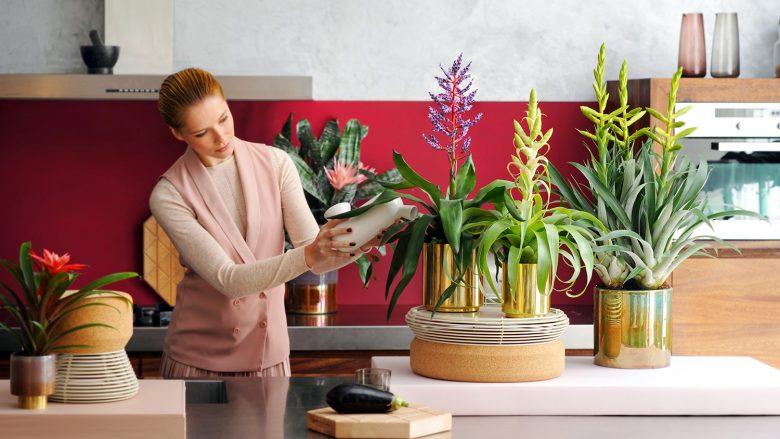 Ndërpret gërhitjen dhe pastron ajrin: Këtë bimë duhet ta mbani në dhomën e gjumit!