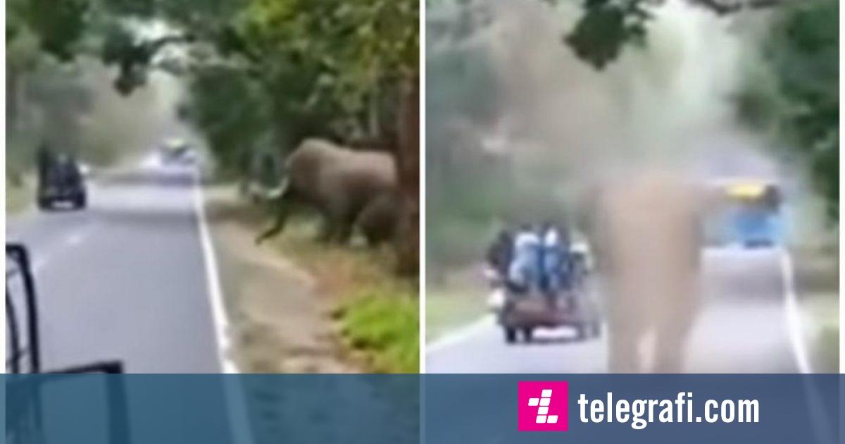 Elefanti i uritur i vërsulet turistëve, në sekondat e fundit i shpëtojnë më të keqes (Video)