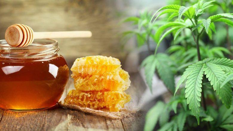 A mundet mjalti të na i zbusë simptomat e alergjisë pranverore?