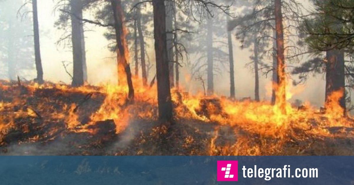 Policia apelon te qytetarët: Mos ndizni zjarre në vende të hapura e prona private