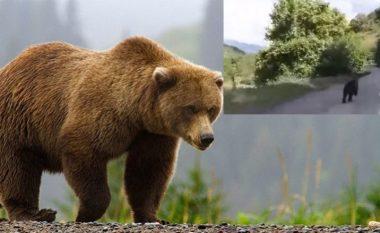 Veterinari thotë se vrasja e ariut në Prizren nuk është zgjidhje, përmend disa metoda se si mund të ndalet