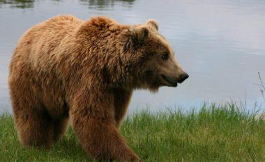 Vrasja e ariut, Agjencia Pyjore thotë se vendimi është keqinterpretuar