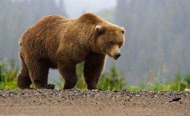 Ministria e Bujqësisë ende pa vendim për vrasjen e ariut të Prizrenit