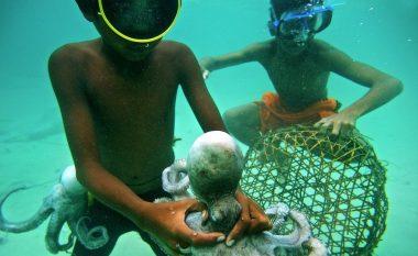Njihuni me fisin Bajau, ata zhyten në 70 metra thellësi -mund ta mbajnë frymën deri në 13 minuta (Foto/Video)