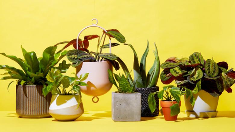 Si ta kuptoni në kohë që lulet tuaja po vyshken? Çfarë duhet të bëni për ta parandaluar