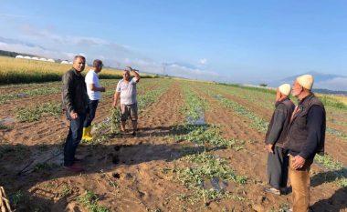 Muharremaj pas të reshurave atmosferike: Dëmet bujqësore në Nepërbisht janë të shumta