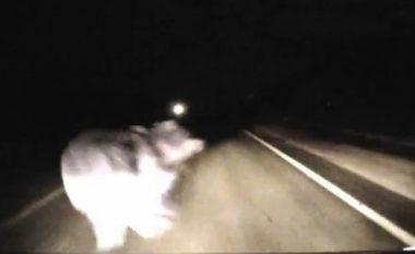 Goditet nga vetura, ngordh ariu i Prizrenit