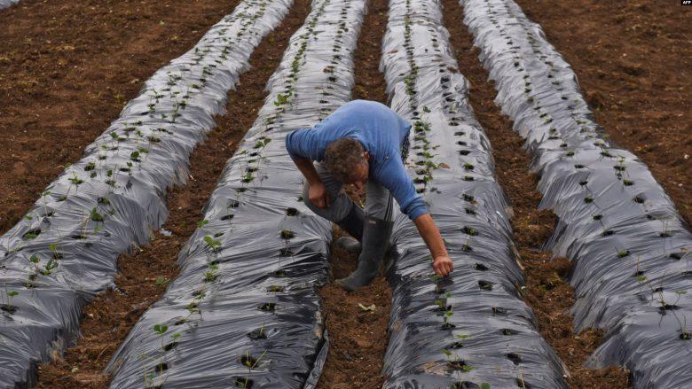 Sektori i përpunimit të ushqimit shënon rritje të prodhimit