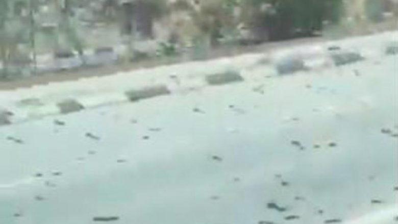 """Miliona karkaleca """"pushtojnë"""" Bahreinin, shoferët ndalin veturat për të """"shijuar"""" pamjet e pazakonta"""