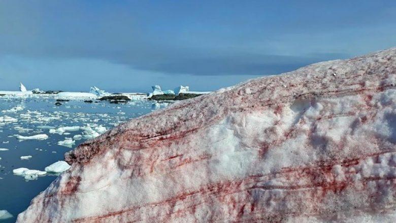 Si në filma horror, në Antarktik bora dhe akulli bëhen të kuqe