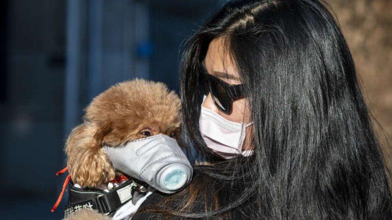 Një qen infektohet me coronavirus në Hong Kong