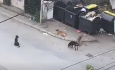 """Qentë endacakë """"pushtojnë"""" një rrugë në Prishtinë, banorët të frikësuar të dalin nga shtëpitë e tyre"""
