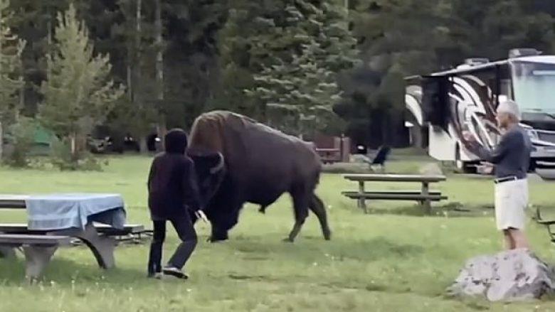 """Iu afrua bizonit më tepër se që duhet, 72-vjeçarja e pëson keq – kafsha """"e fluturon"""" rreth 5 metra në ajër"""