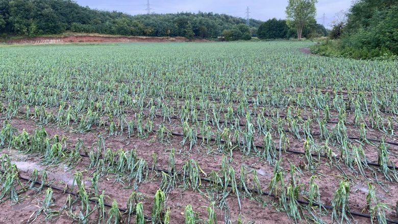 Breshëri shkakton dëme në kultura bujqësore, kërkohet fond i veçantë për fermerët