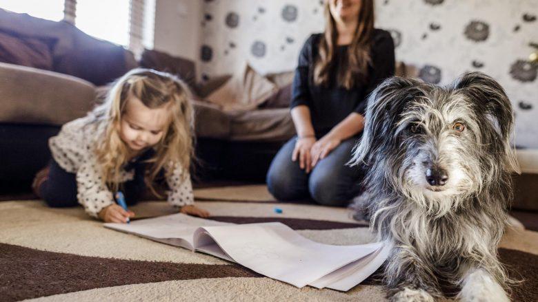 15 qentë më të mirë për familjet me ose pa fëmijë