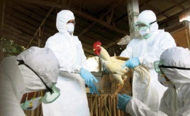 AUV konfirmon: Gripi i shpezëve prezent në Kosovë